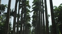 Botanical Garden of Rio de Janeiro Stock Footage