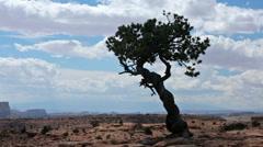 Silhouette cedar tree southwest desert rock mountain HD 9915 Stock Footage