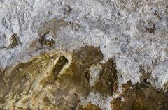 Geological organic texture Stock Photos