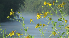Wildflowers on River 02 - stock footage