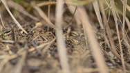 Stock Video Footage of Ants on an anthill closeup, dolly shot