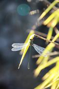 Dragonfly on bamboo leaf Stock Photos