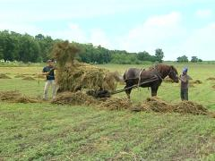 Hay Stock Footage