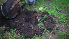 The man in the garden with a shovel digging a hole in the ground Stock Footage