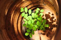 Small plant grow up in baked clay pot Stock Photos