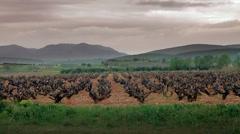 Vineyards field Stock Footage