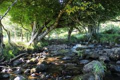 Peaceful creek with pebbles in old forest Stock Photos