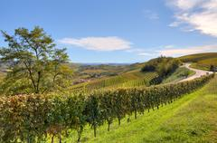 Fields and vineyards in piedmont, italy. Stock Photos