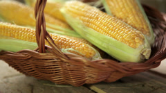 Ear of corn Stock Footage