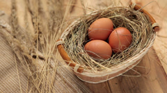 Brown chicken eggs Stock Footage