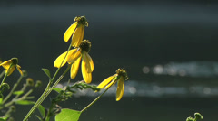 Wildflowers on River 05 - stock footage