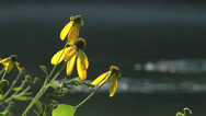 Stock Video Footage of Wildflowers on River 05