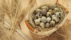 Quail eggs Stock Footage