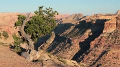 Wedge Overlook San Rafael Utah rustic cedar tree HD 9832 Stock Footage