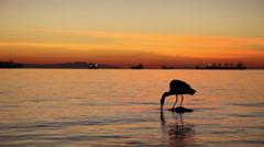 Great Blue Heron bird in North America Stock Footage