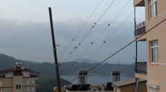 Swallows on wire at dawn zoom in Stock Footage