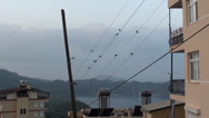 Stock Video Footage of Swallows on wire at dawn zoom in