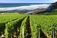 Stock Photo of vineyard by the sea