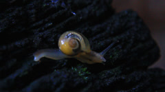 Close-up of snail walking on the timber Stock Footage