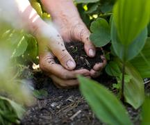 Stock Photo of female hands with soil working in garden