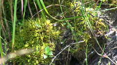 Moss in the forest, green roofs, alpine plants, vegetation, horticultural - stock footage