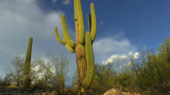 Arizona Saguaro Cactus Cloud Puffs Time Lapse Stock Footage