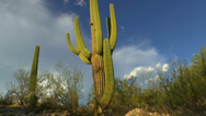 Stock Video Footage of Arizona Saguaro Cactus Cloud Puffs Time Lapse