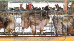 Chicken farm. Stock Footage