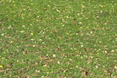 Green grass in autumn park Stock Photos