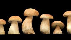 The line of boletus edulis - stock footage