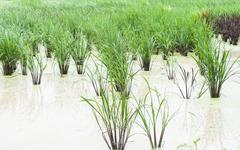Crops in the agricultural demonstration Stock Photos