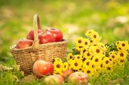 Stock Photo of basket with red apples in autumn