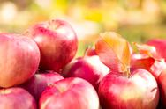 Stock Photo of red apples in autumn garden