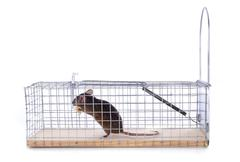Mouse trap Stock Photos