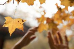 Human hands reaching for a leaf in the autumn - stock photo