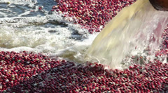 Water Pouring into a Cranberry Bog Stock Footage