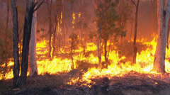 Rural Fire Service back burns during Sydney bush fire PT7 Stock Footage