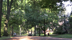 Shady tree lined street Stock Footage