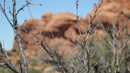 Stock Video Footage of Arches National Park Rack Focus