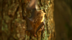 bat crawling on a tree - stock footage