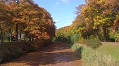 Canal covered with autumn leaves + pan oak trees Stock Footage