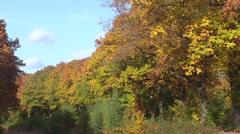 Row of oak trees in autumn colors + crane foliage Stock Footage