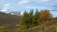 Stock Video Footage of dovrefjell autumn