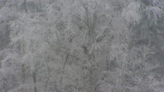 Severe winter - Deciduous tree covered with white frost + tilt up grey sky Stock Footage