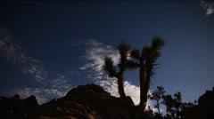 4K Astrophotography Time Lapse -Joshua Tree under Moonlight- Tilt Down Stock Footage