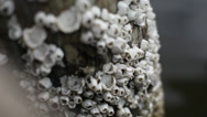 Stock Video Footage of Close Up on Barnacles