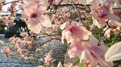 Spring Season In Bloom Slow Motion Stock Footage