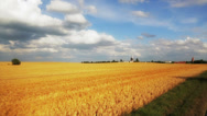 Stock Video Footage of Yellow wheat field in holland