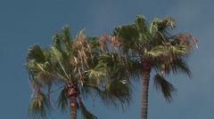 Palm trees in the wind in San Francisco Stock Footage