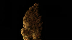 Stock Video Footage of big cannabis bud rotating 2